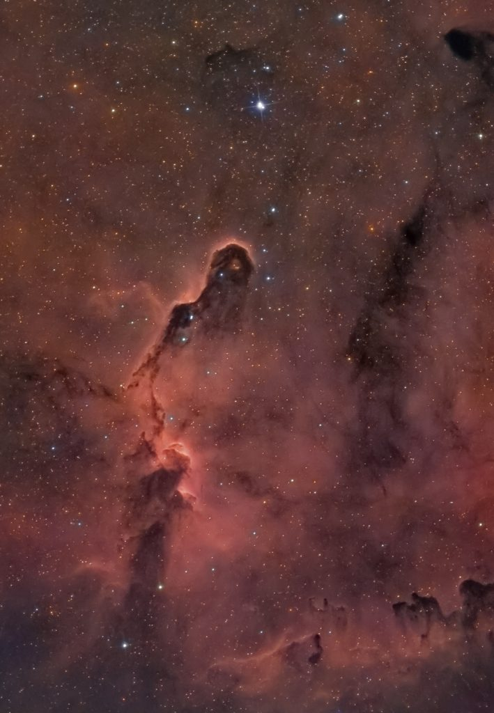 Nebulosa oscura chiamata vdB 142 e soprannominata Proboscide d'Elefante.