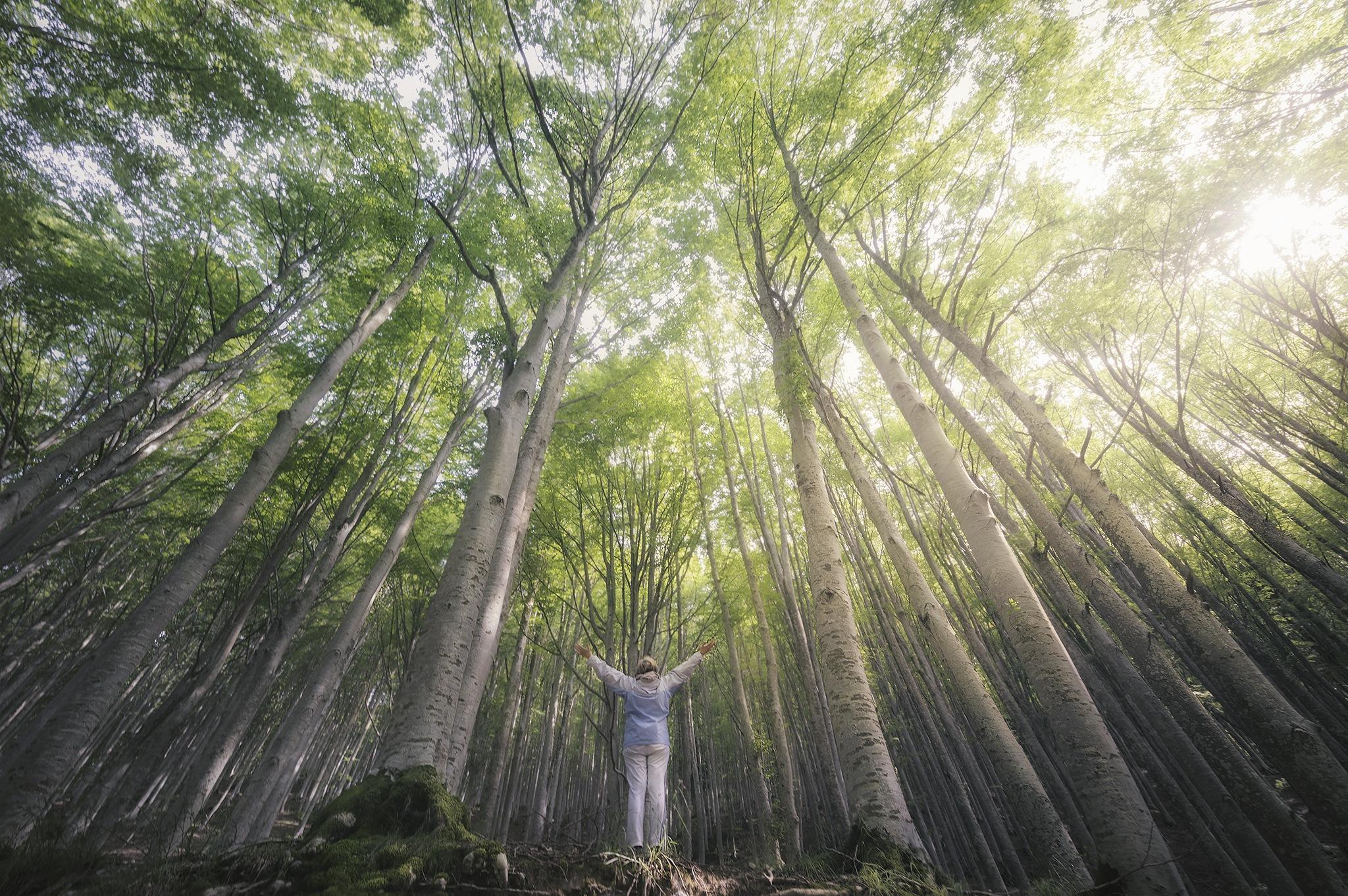 Into the Forest fotografia foresta