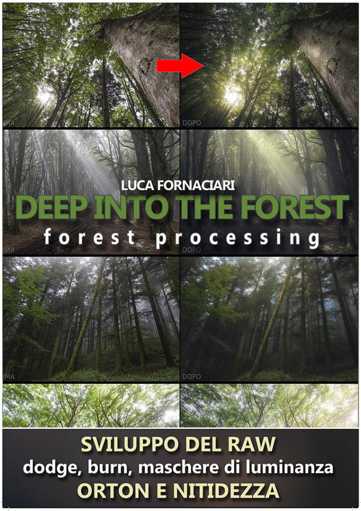deep into the forest foresta elaborazione photoshop camera raw orton dodge burn maschere luminanza foglie alberi bosco