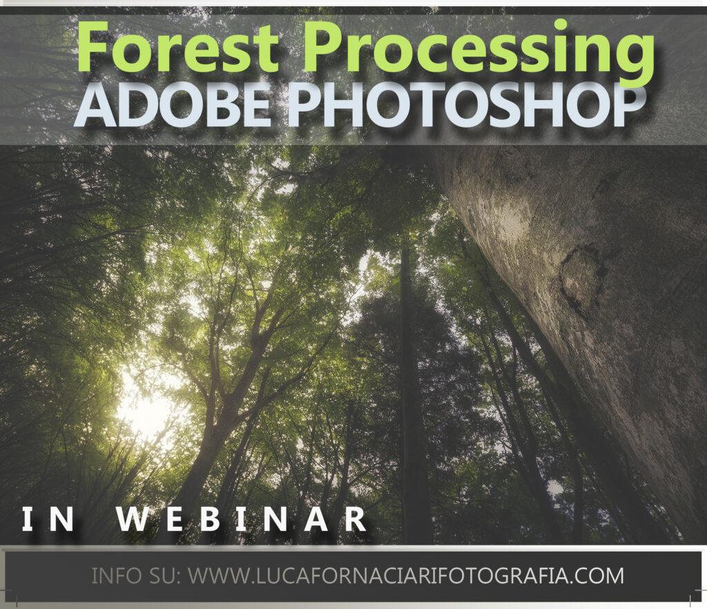 dodge burn maschere di luminanza photoshop fotografi maschere elaborazione guida lezioni corso webinar adobe color mapping forest processing