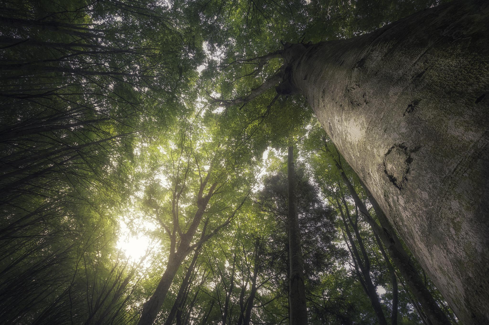 Il tuo percorso formativo photoshop forest processing